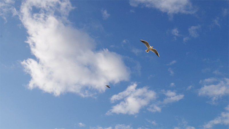 Himmel mit Vogel